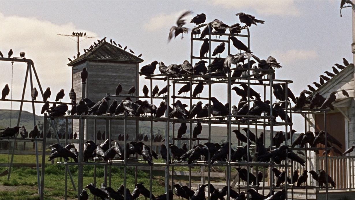 hitchcockthebirdsbanner
